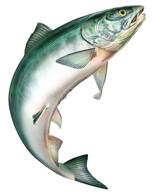 عکس png ماهی