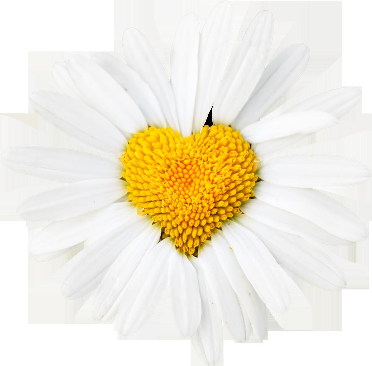 گل PNG